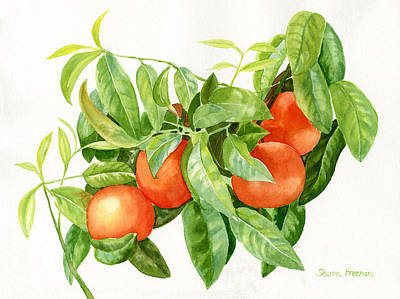 Tangerines With Leaves Poster by Sharon Freeman