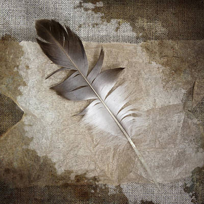 Tea Feather Poster by Carol Leigh