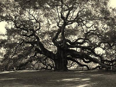 The Angel Oak Poster by Susanne Van Hulst
