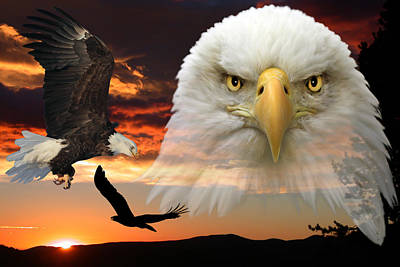 The Bald Eagle Poster by Shane Bechler