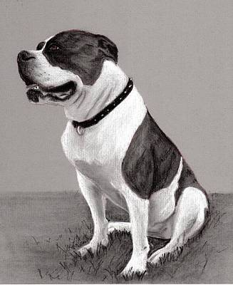 The Boss - Portrait Of An American Bulldog Poster by Ruthie K Sutter