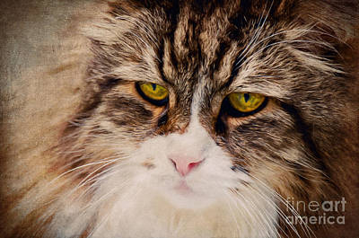 The Cat Poster by Angela Doelling AD DESIGN Photo and PhotoArt