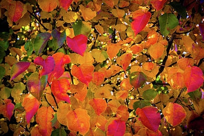 The Colors Of Autumn Number 2 Poster by TL Mair