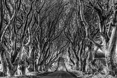 The Dark Hedges Poster by Chronography