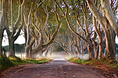The Dark Hedges Poster by George Pafilis