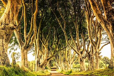 The Dark Hedges Poster by Julia Van stone