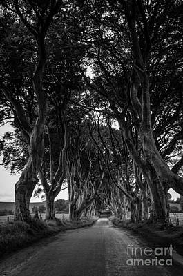 The Dark Hedges Poster by Rjd Photography