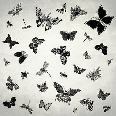 The Flutter And Fly Poster by Mark Rogan