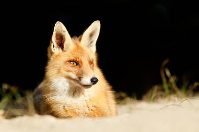 The Fox And The Light Poster by Roeselien Raimond