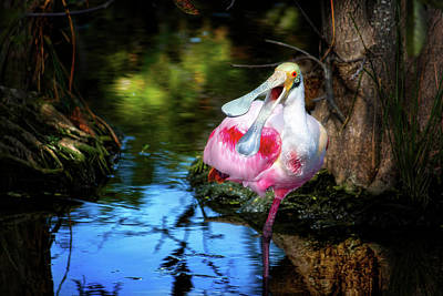 The Happy Spoonbill Poster by Mark Andrew Thomas