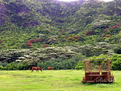 The Horse Pasture Under The Albesia Trees Poster by Mary Deal
