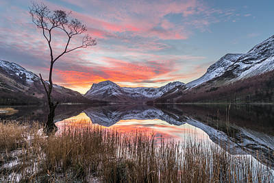 The Lone Tree - Buttermere, Lake District. Poster by Daniel Kay