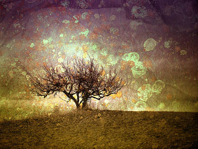 The Lone Tree Poster by Tara Turner