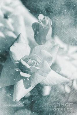 The Magic Of Roses Poster by Linda Lees