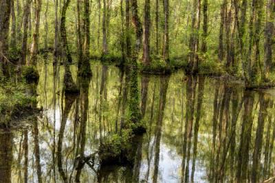 The Marsh Poster by Randy Walton