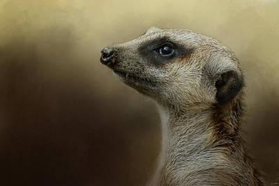 The Meerkat Poster by Jai Johnson