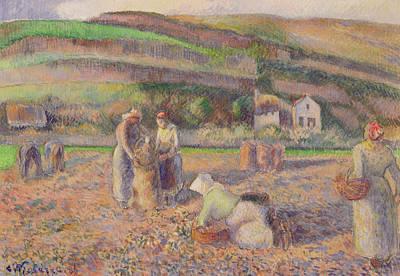 The Potato Harvest Poster by Camille Pissarro