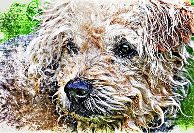 The Scruffiest Dog In The World Poster by Meirion Matthias