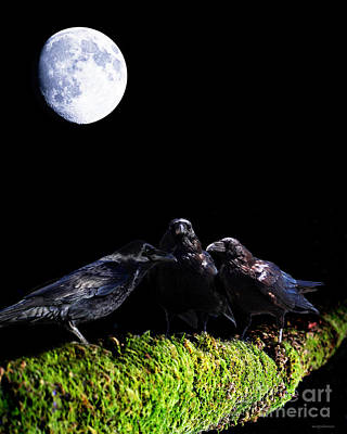 The Secret Society . Ravens Of The Night Under The Moon Poster by Wingsdomain Art and Photography