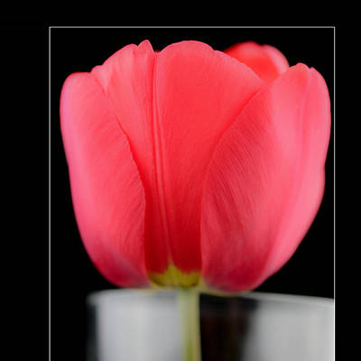 The Tulip   In Frame Poster by Toppart Sweden