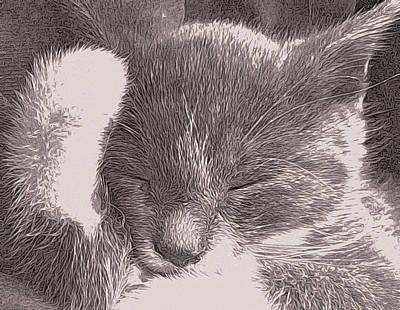 The Unbearable Cuteness Of Kitten Poster by Susan Maxwell Schmidt