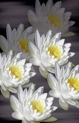 The White Garden Poster by Rosalie Scanlon