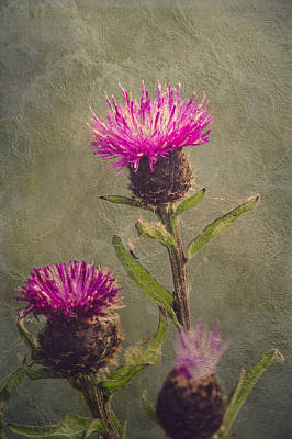 Thistle Poster by Wim Lanclus