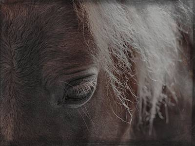 Thoughts Of Horse Poster by Gothicolors Donna Snyder