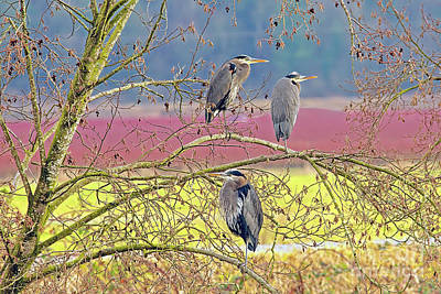 Three Herons Poster by Sharon Talson