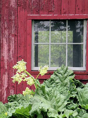 Through The Window Poster by Rosalie Scanlon