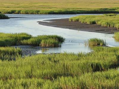 Tidal Marsh Poster by Al Powell Photography USA