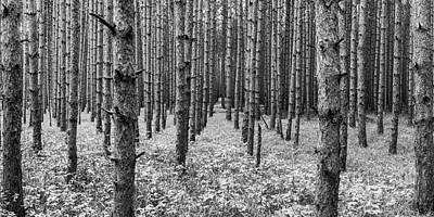 Timber Pines In Sleeping Bear Dunes Poster by Twenty Two North Photography