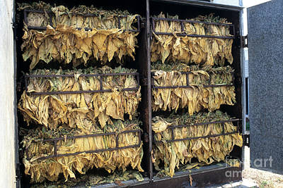 Tobacco Drying In Barn Poster by Inga Spence