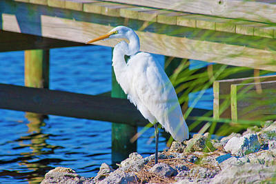 Topsail Egret Poster by Betsy C Knapp