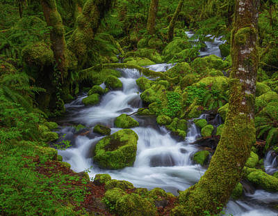 Tranquility Creek Poster by Darren White