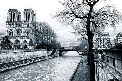 Tree Along The Seine Poster by John Rizzuto