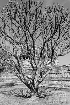 Tree And Temple Poster by Hitendra SINKAR