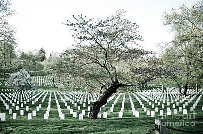 Tree In Arlington Cemetery  Poster by Scott Sawyer
