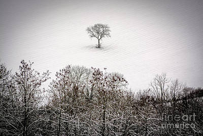 Tree Isolated In Winter. Auvergne. France Poster by Bernard Jaubert