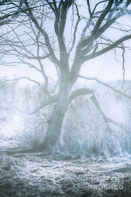 Tree Of Frost Bite Poster by Jorgo Photography - Wall Art Gallery