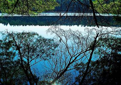 Tree Overhang Reflected In The Water Poster by Joy Nichols