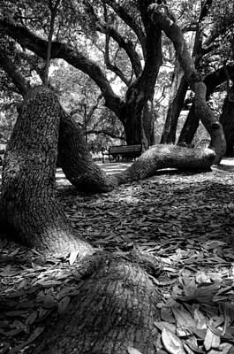 Tree Root In Black And White Poster by Greg Mimbs