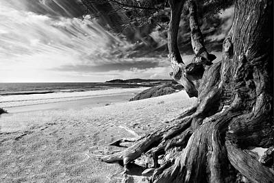 Tree Roots Carmel Beach Poster by George Oze