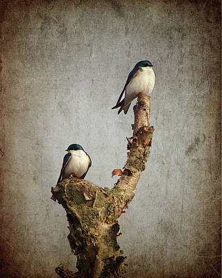 Tree Swallows Poster by Al  Mueller