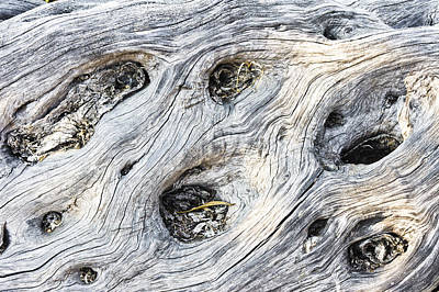Tree Trunk Texture Poster by Tom Gowanlock