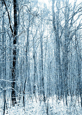 Tree Trunks Pattern Poster by Svetlana Sewell