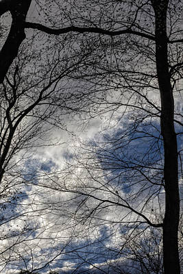 Treees And Clouds Early Spring Poster by Robert Ullmann