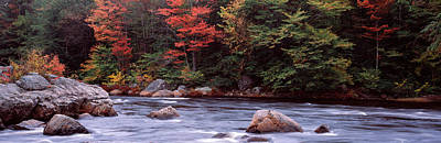 Trees Along A River, Moose River Poster by Panoramic Images