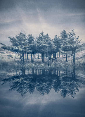 Trees In Blue Poster by Debra and Dave Vanderlaan