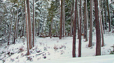 Winter Forest 2 Poster by Marilyn Wilson